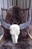 Buffel Skull S5S12_