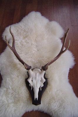 Groot gewei edelhert, 7 ender, H 57cm
