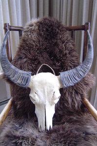 Buffel Skull S5S12